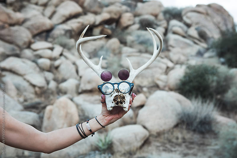 Deer Skull Wearing Sunglasses by MEGHAN PINSONNEAULT for Stocksy United