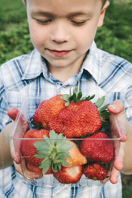 Boy fresh picked strawberries by Stephen Morris for Stocksy United