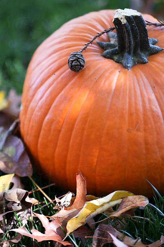 Pumpkin on the grass amongst leaves by Carolyn Lagattuta for Stocksy United