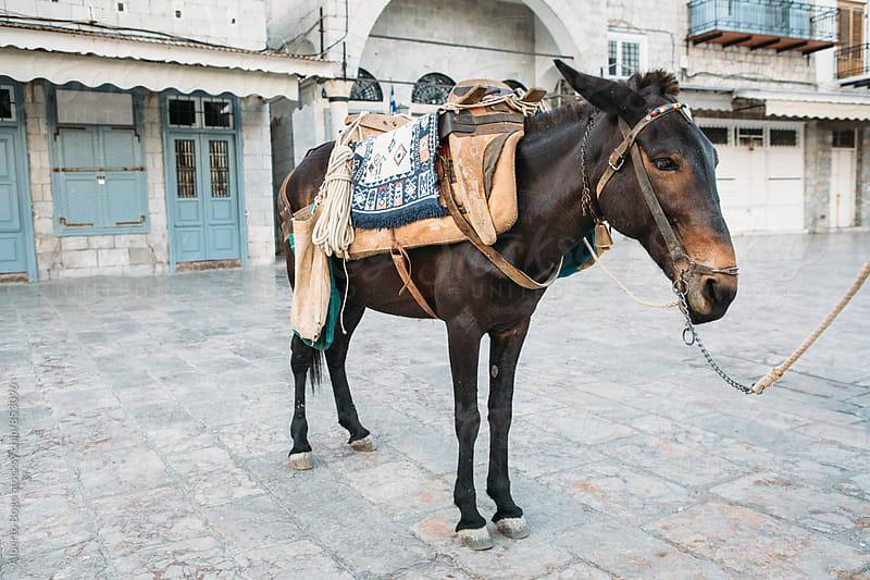 Donkeys at the port by Alberto Bogo for Stocksy United