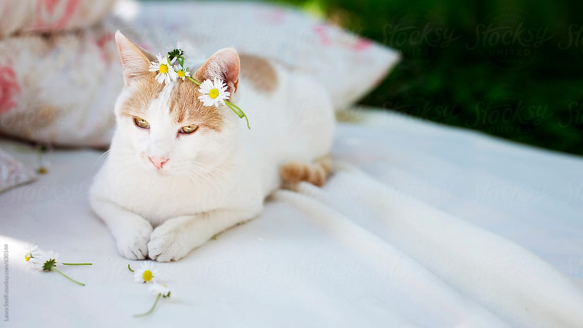 Bright Image Of Cat Laying On White Blanket In Garden And Wearing