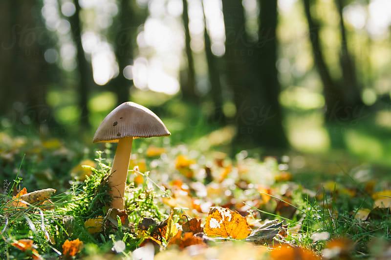 White capped mushroom on forest floor, horizontal by Kirsty Begg for Stocksy United