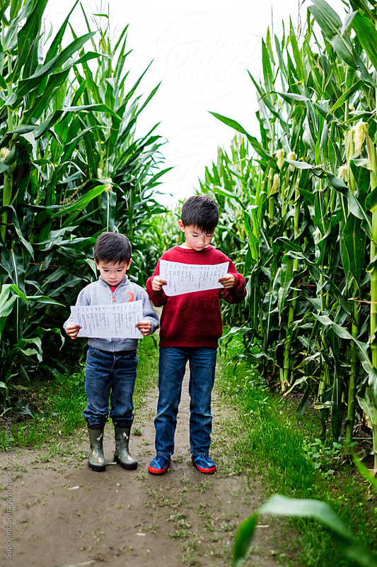 Asian boys looking at the map in a corn maze by Suprijono Suharjoto for Stocksy United