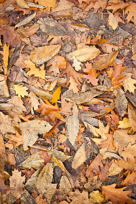 Brown and yellow coloured autumn leaves on the forest floor by Ivo de Bruijn for Stocksy United