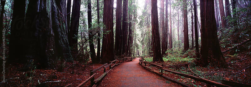 Muir Woods, California by Jason Denning for Stocksy United