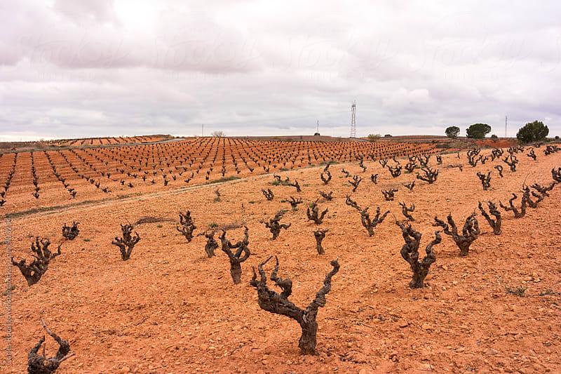 Vineyard landscape by Carles Rodrigo Monzo for Stocksy United