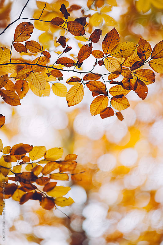 Leaves with autumn colors by CACTUS Blai Baules for Stocksy United