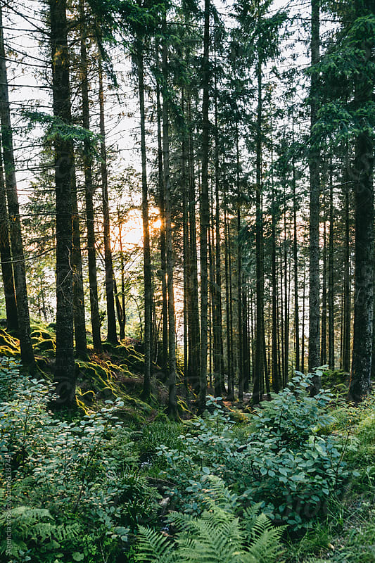 Forest Sunlight by Agencia for Stocksy United