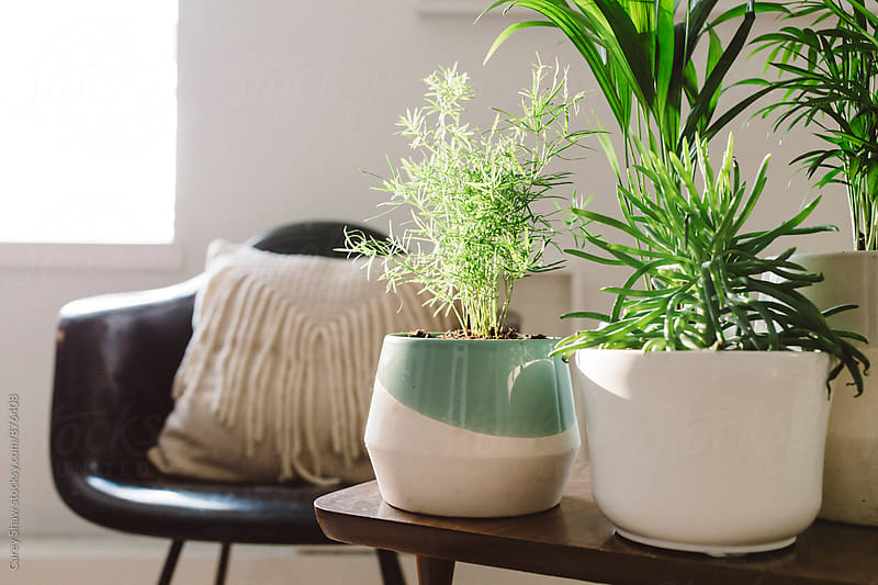 Modern planters and greenery in bright home by Carey Shaw for Stocksy United