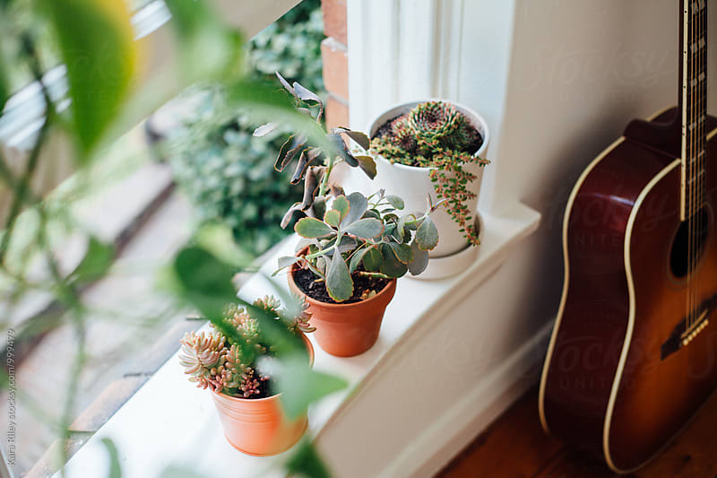 Succulent Plants on Windowsill + Guitar by Kara Riley for Stocksy United
