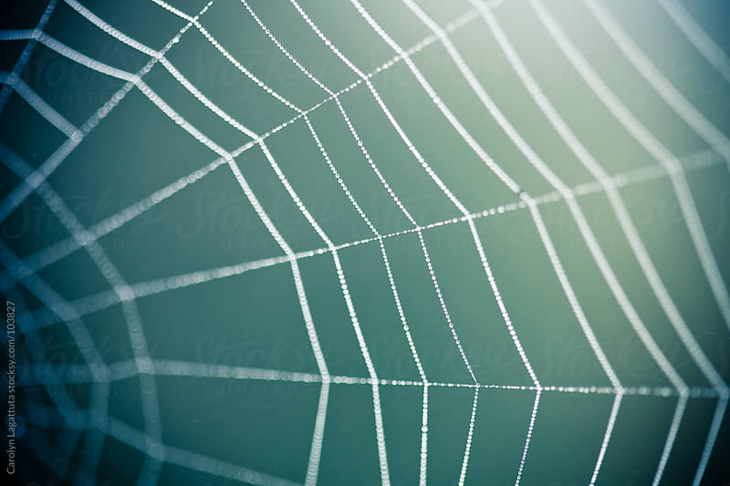 Close up of a spider web with a dark blue green background by Carolyn Lagattuta for Stocksy United