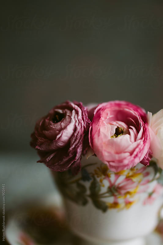 Pink Ranunculus flowers in a vintage bone china cup by Helen Rushbrook for Stocksy United
