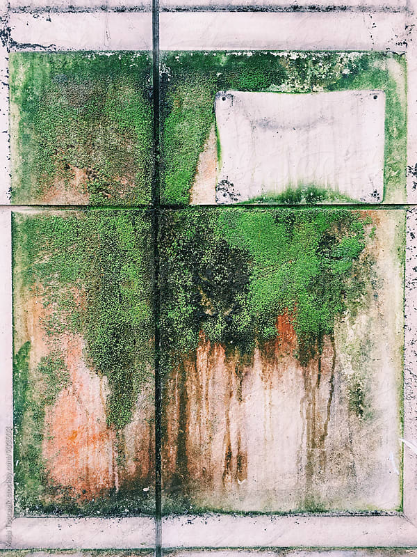 Colorful moss on an old wall by Maja Topcagic for Stocksy United