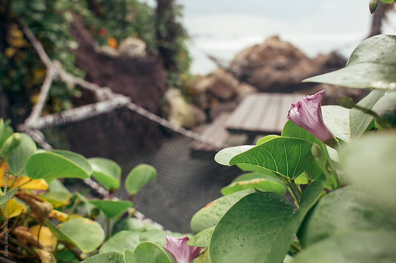 Plants and a hammock on a tropical island  by Jovo Jovanovic for Stocksy United