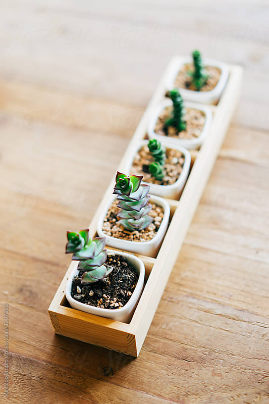 Succulent plants by Maa Hoo for Stocksy United