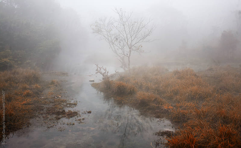Buxa Tiger Reserve in a foggy winter morning by Saptak Ganguly for Stocksy United