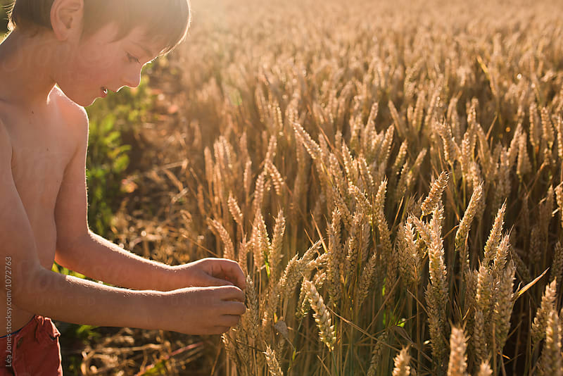 child picking wheat corns by Léa Jones for Stocksy United