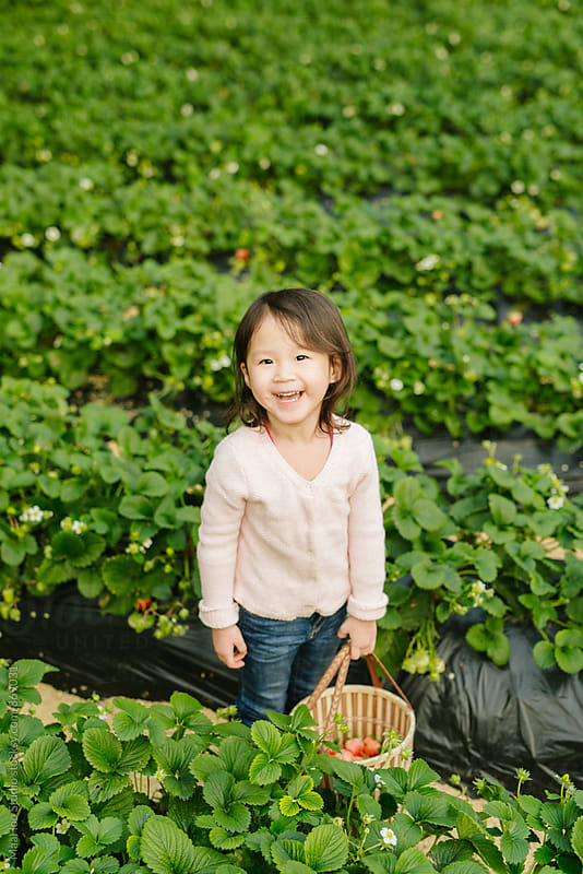 Young girl picking strawberry in greenhouse by Maa Hoo for Stocksy United