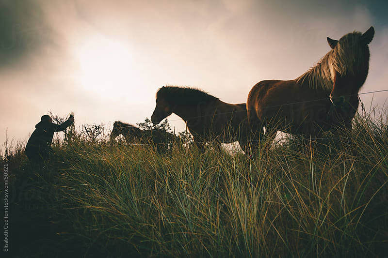 Man feeding Iceland horses in dramatic landscape in Denmark by Elisabeth Coelfen for Stocksy United