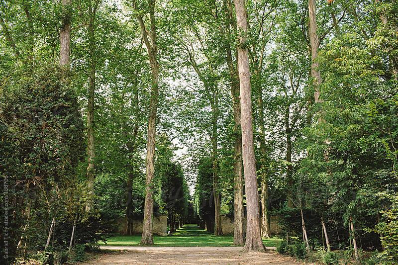 Tree alley in royal gardens by Gabriel Tichy for Stocksy United