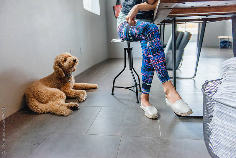 Goldendoodle sits with his owner at work by Cara Slifka for Stocksy United