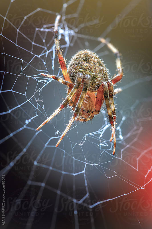 So I'm not really a huge fan of spiders; especially ones with more hair than a Yeti or one of THOSE  by ALAN SHAPIRO for Stocksy United