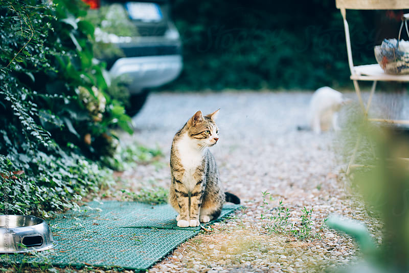 Adult cat sitting on green doormat in garden by Laura Stolfi for Stocksy United