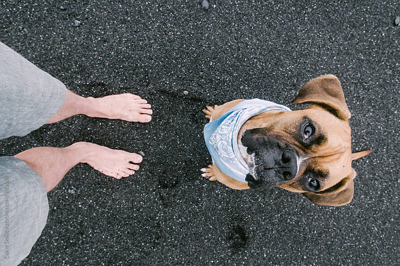 Boxer puppy, black sand and human feet by Caine Delacy for Stocksy United