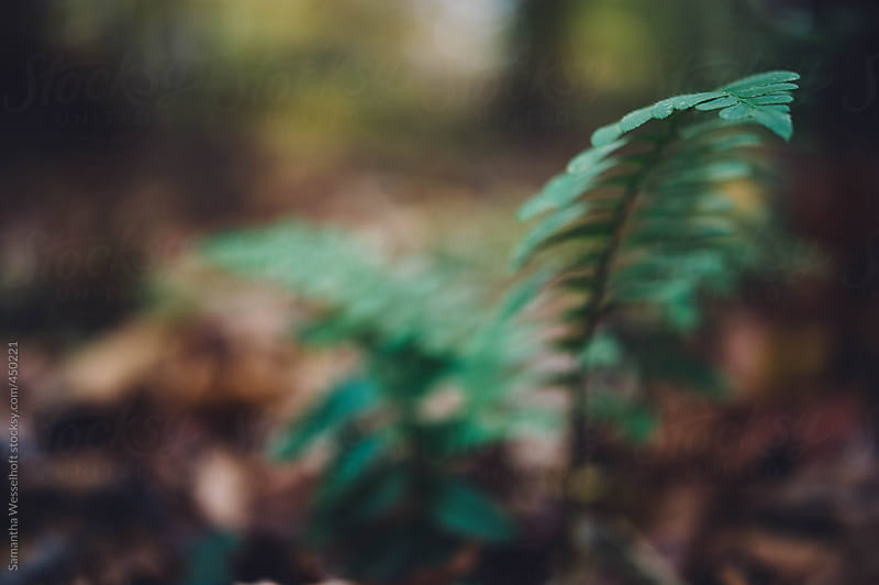 ferns along the trail by Samantha Wesselhoft for Stocksy United
