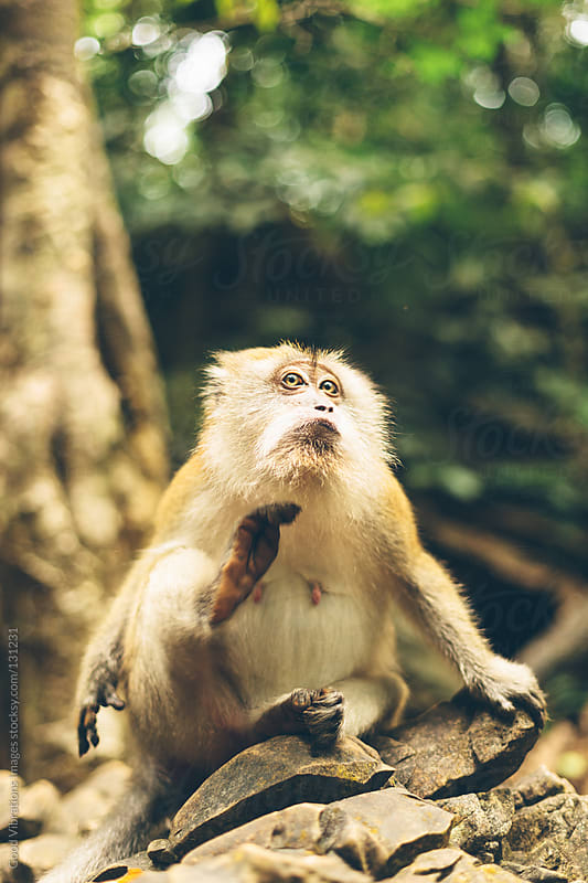 Monkey in the Forest by Good Vibrations Images for Stocksy United
