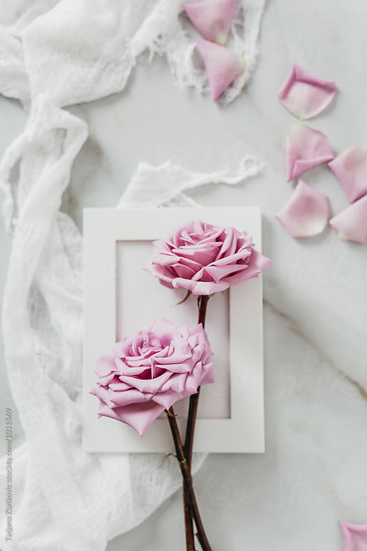 Frame with pink roses by Tatjana Zlatkovic for Stocksy United