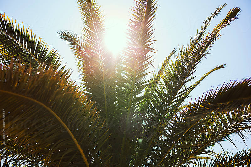 Sunlight through palm tree leaves by Maja Topcagic for Stocksy United
