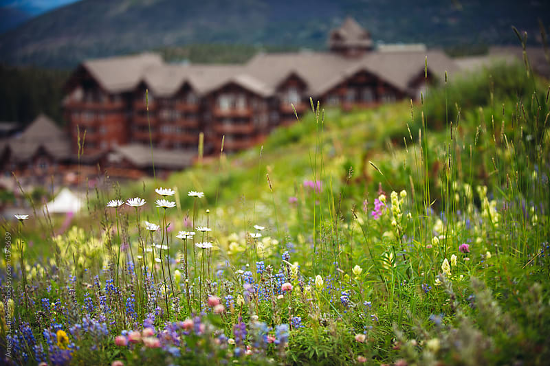 Wildflowers on a mountain meadow by Angela Lumsden for Stocksy United