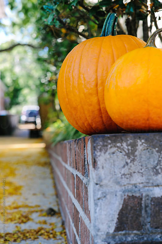 pumpkins up on a brick wall by Samantha Wesselhoft for Stocksy United