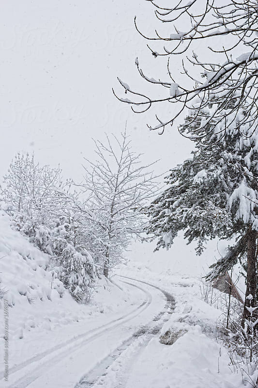 Snowy day by Milena Milani for Stocksy United