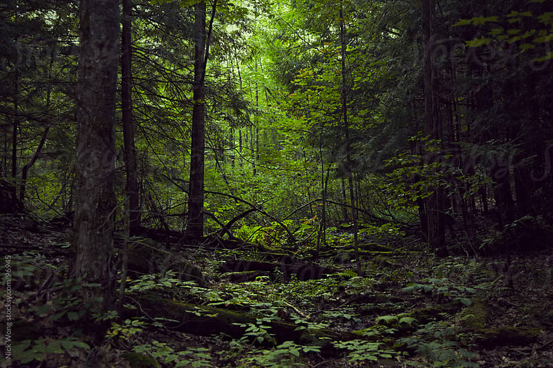 View of Canadian forest by Nick Wong for Stocksy United