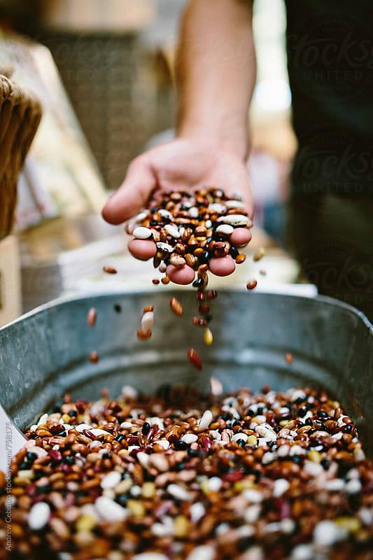 Beans - digital file by Andrew Cebulka for Stocksy United
