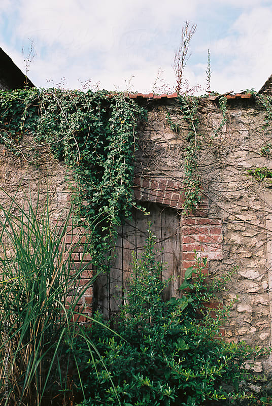 door with an overgrown vine by Léa Jones for Stocksy United