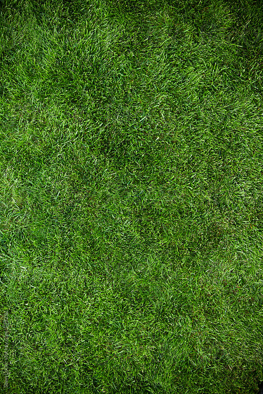 Grass: Empty Area of Grass by Sean Locke for Stocksy United