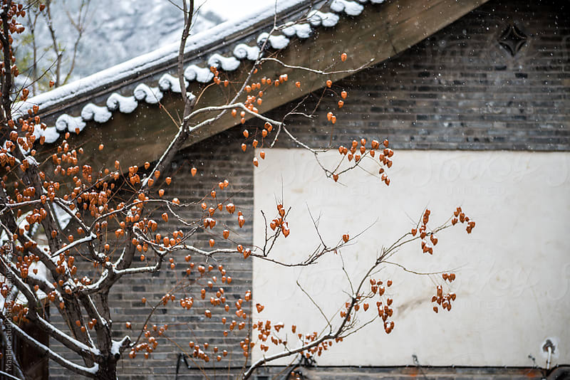 Tree in a traditional Chinese courtyard by MaaHoo Studio for Stocksy United