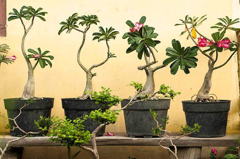 Tropical Trees by Lumina for Stocksy United