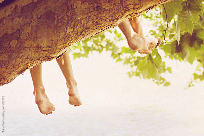 Kids in a tree hanging feet over the edge of the limb. by Tana Teel for Stocksy United