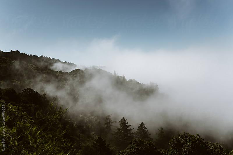 Santa Cruz Mountains by Ryan Tuttle for Stocksy United