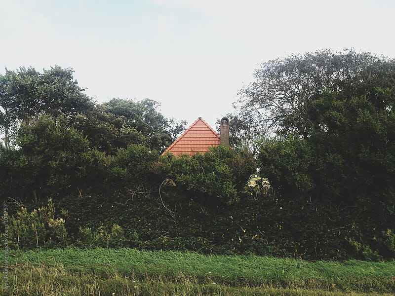 Little house peaking out above the trees by Ivar Teunissen for Stocksy United
