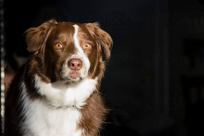 Dog looking at camera. by Holly Clark for Stocksy United