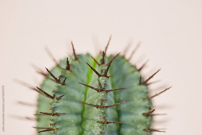 Cactus plant by sally anscombe for Stocksy United