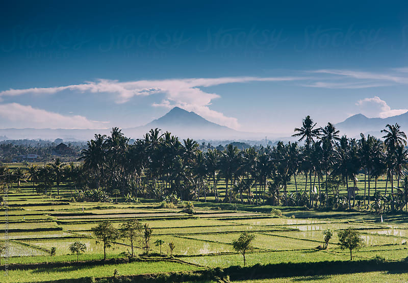 Bali landscape with rice paddys and volcanos by Soren Egeberg for Stocksy United