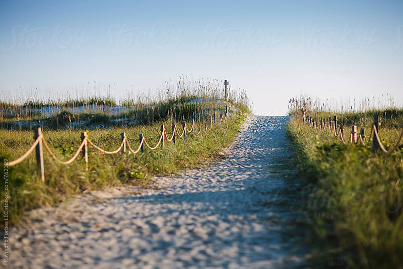 Path to Beach in Autumn Afternoon Light by Raymond Forbes LLC for Stocksy United