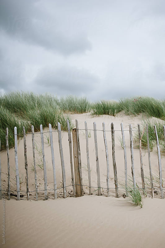 Weathered wooden fence and sand dunes at the beach by Suzi Marshall for Stocksy United