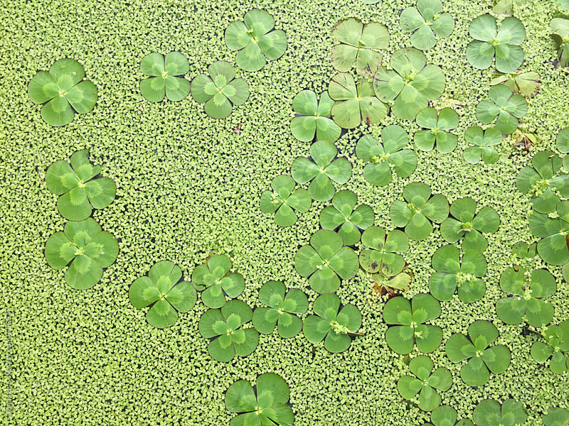 Green Pond Plants & Water Lilies From Above by Leigh Love for Stocksy United
